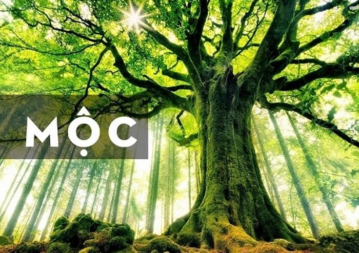 Bản tính mệnh Mộc trời sinh gắn liền với thiên nhiên cây cối.