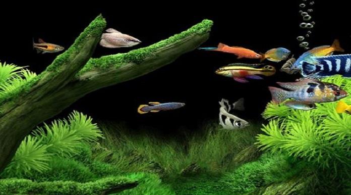 Hướng đặt bể cá phong thủy